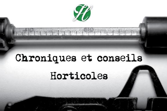 Nos blogues sur chroniques et conseils horticoles