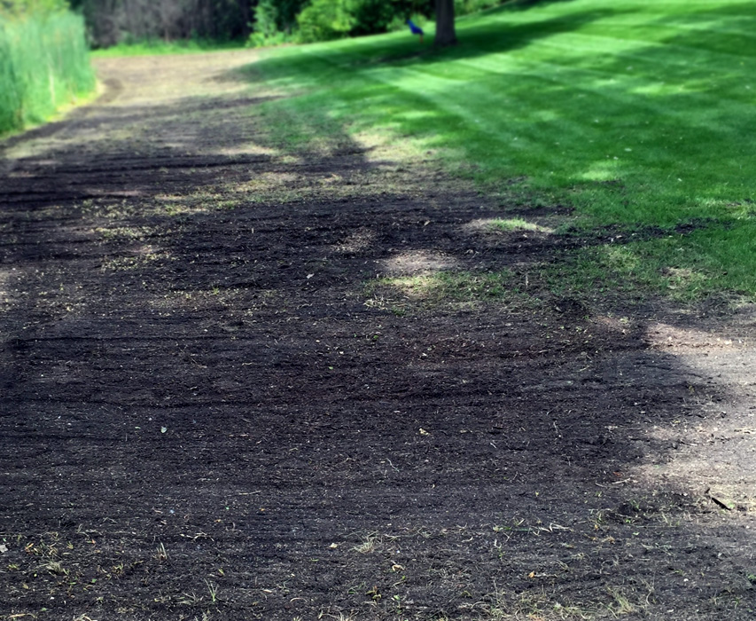Semer des graines de gazon en dessous de votre pelouse existante