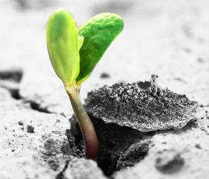 Plante en germination