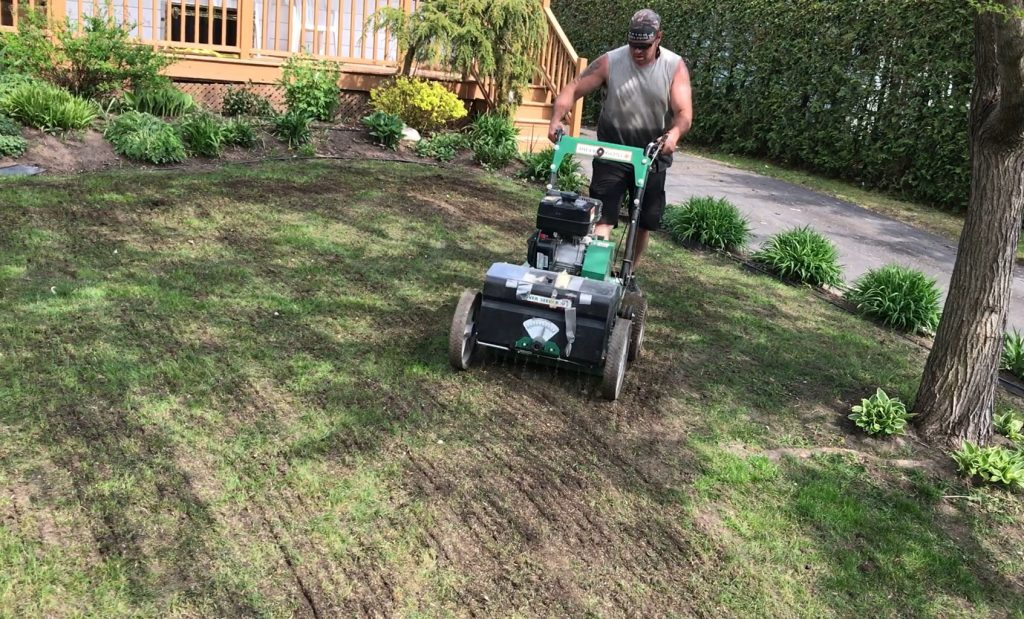 Réparation de la pelouse avec la méthode over seeding, qui permet d'insérer les graminées dans le sol sans enlever l'ancien gazon